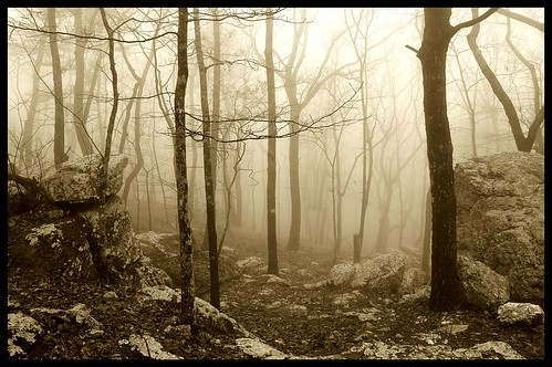 trees misty fog sepia forest rocks alabama foggy cheaha bamawester napg