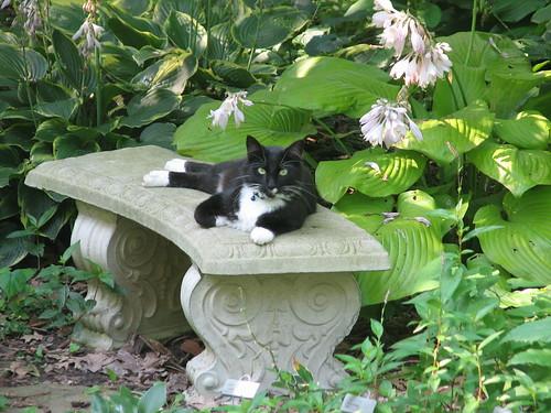 Zak in the hosta garden