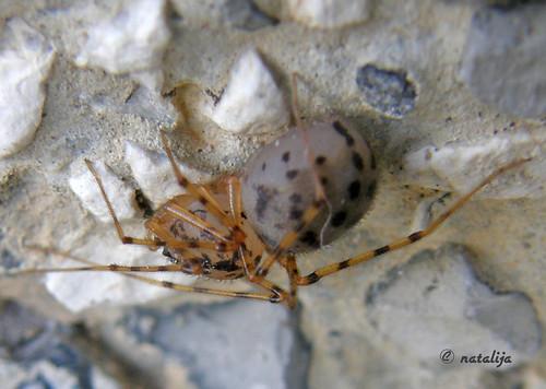 nature spider slovenia pajek natalija narava npisec