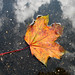 Autumn Art in a Puddle