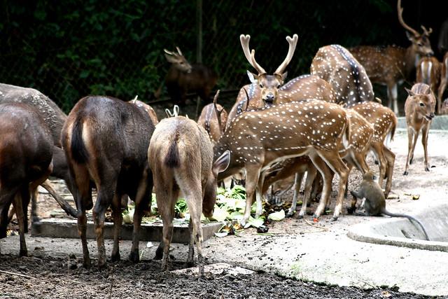 deers flickr photo sharing