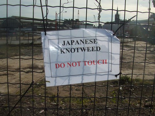 A sign at Kings Cross Railway Station, London – Japanese Knotweed has been identified for treatment