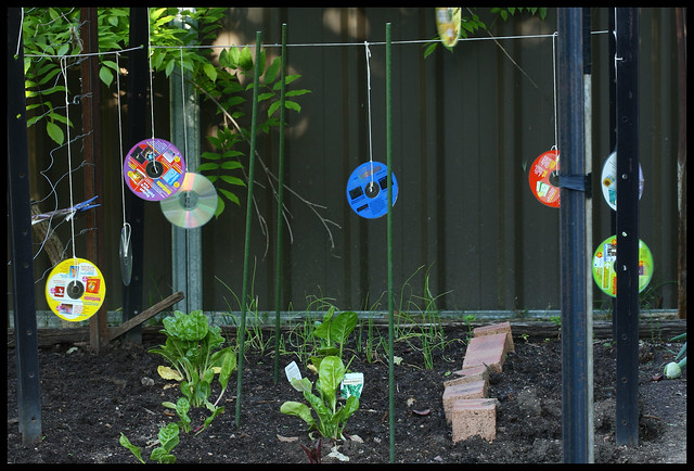 Keeping The Birds Away From The Vege Garden Flickr