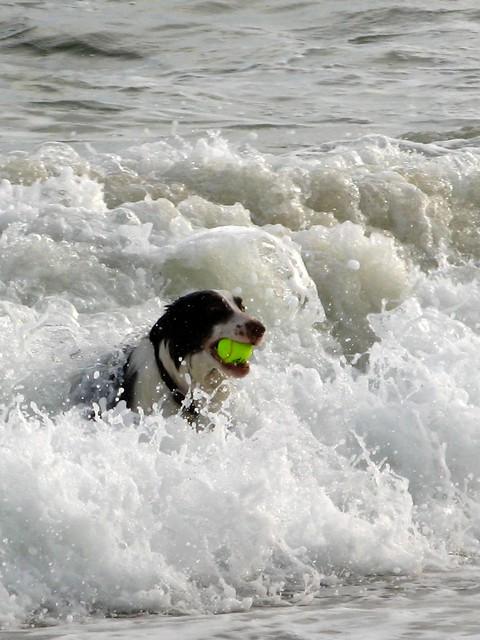 2603 Gromit Rides the Surf
