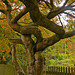 Small photo of Tree