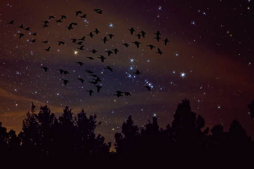 sky nature composite night photoshop manipulated dark stars evening geese nikon colorado astrophotography orion co astronomy photoart constellation afterdark lightpollution d300 wetmountains clff impressedbeauty aplusphoto oraclex lesamisdupetitprince