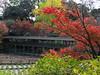 Photo:Leaves / 紅葉(こうよう) By TANAKA Juuyoh (田中十洋)