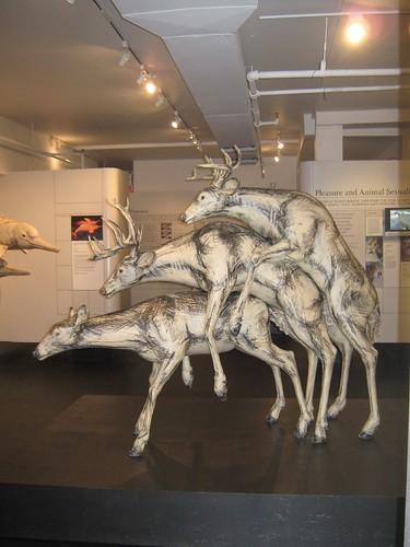 deer 3some