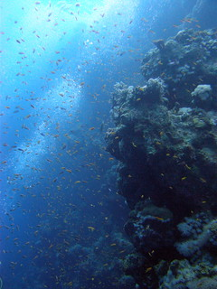 Coral wall on the outer edge of the Blue Hole