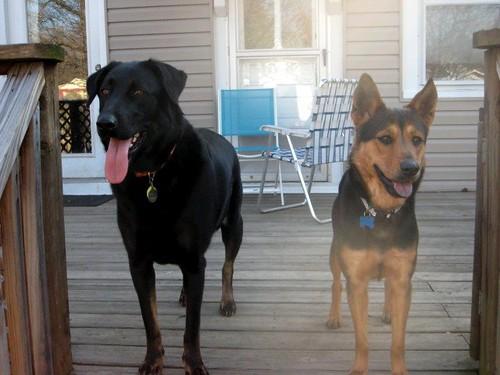 Bristow & Nellie