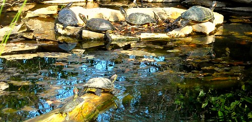 park nature beauty zoo scenery texas wildlife scenic turtles ftworth 2009 skookums spiritofphotography