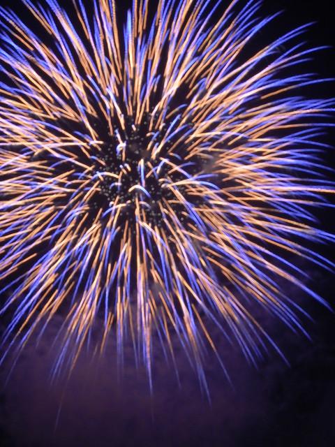Epic Fireworks - Violet Chrysanthemum