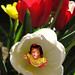 My Little Tulip by Nicki_2004