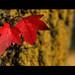 Autumn Incoming