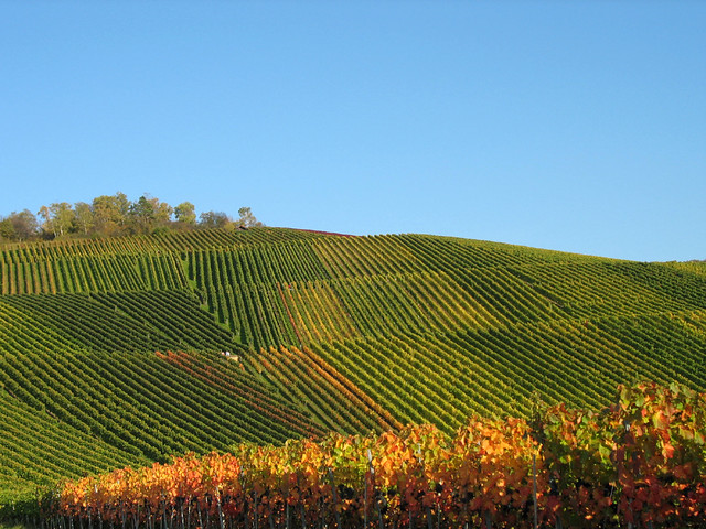 Spoilt by the Sun - Vineyard Landscape in Germany