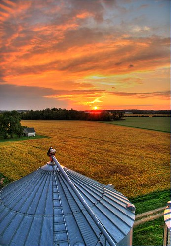 sunset field farm grain maryland bin silo crop soy chestertown
