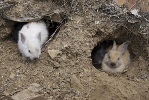Rescate abierto de conejos