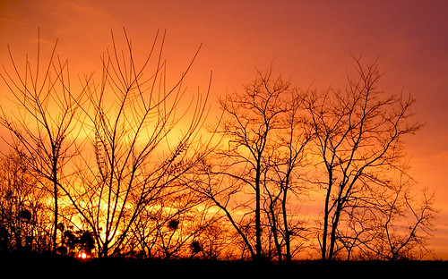 orange tramonto branches rami coucherdesoleil arancione