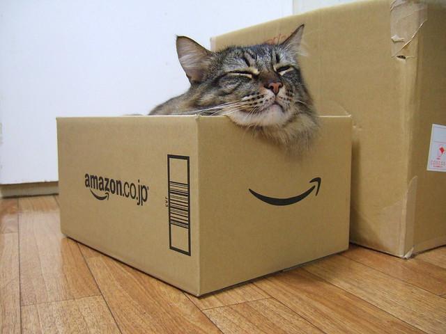 Amazon box cat