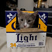 kitty drank all the corona