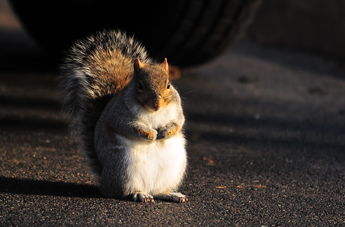 Squirrels Are Cute--Right, Squirrels Are Smart--Wrong