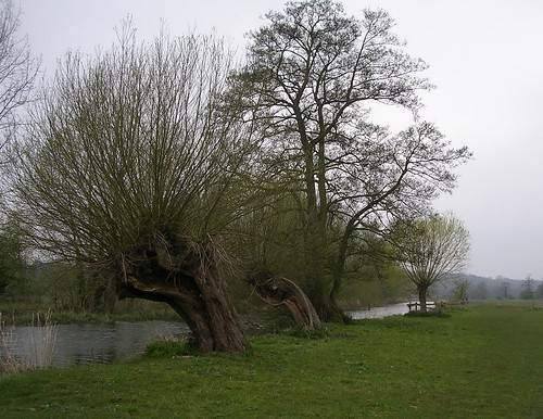Along the Stour