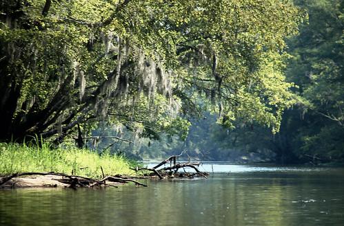 Edisto River Moss
