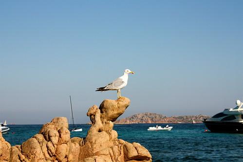 Perché tu mi oda, le mie parole a volte si assottigliano come le orme dei gabbiani sulle spiagge.  Pablo Neruda