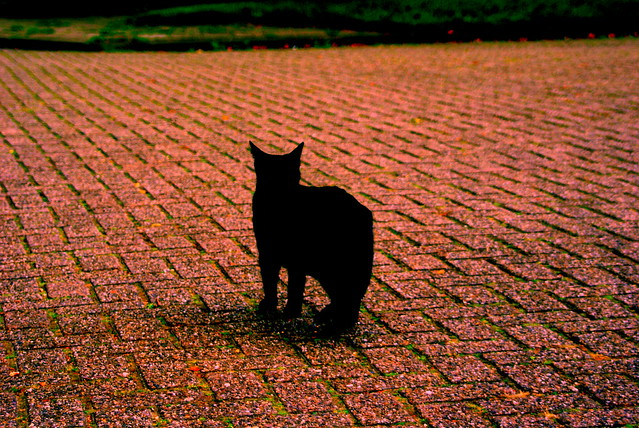 Black Cat Scares Dog