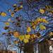 Fall mid november Blackheath