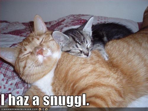 3059100219 b0c28f2162 funny cats a 019