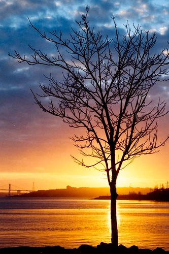 morning sky sun canada reflection tree water nova sunrise scotia halifax colourartaward platinumheartaward