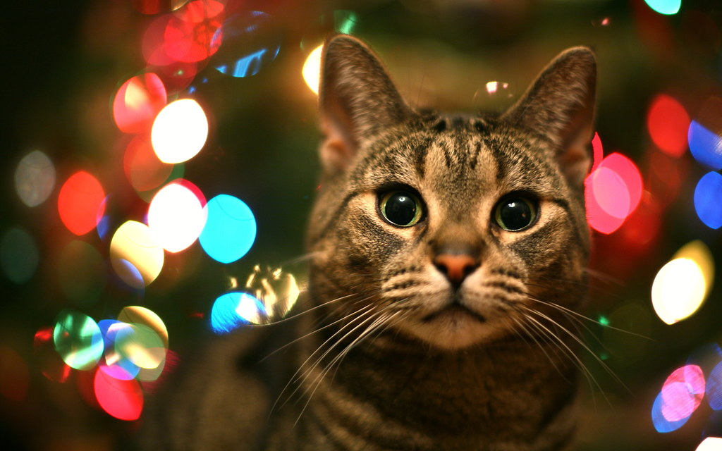 La chatte de Noël / The Christmas She-Cat