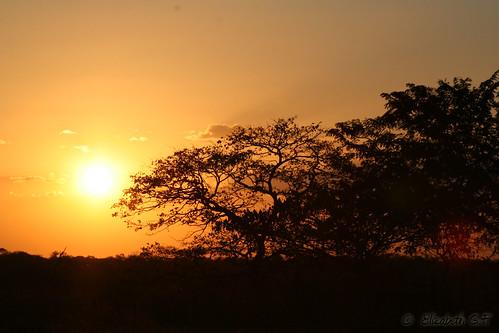 naturaleza flora paisaje amanecer