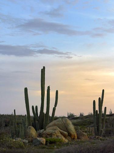 sunset cactus beach dutch landscape sony cybershot aruba f717 serge melki antilles oranjestad altovista altovistachapel featuredonadidapcom