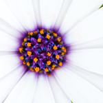 FLOWER MACRO #5