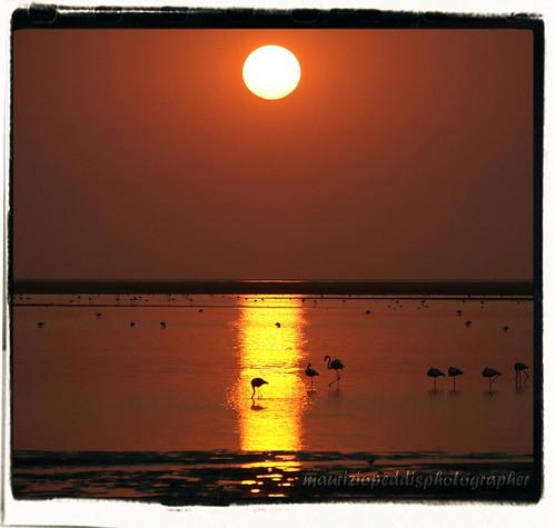 africa sunset sun bay flamingo namibia walvis fenicotteri aplusphoto peopea artofimages