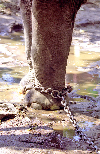 Gods in Chains ...