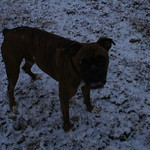 Scrappy in the Snow