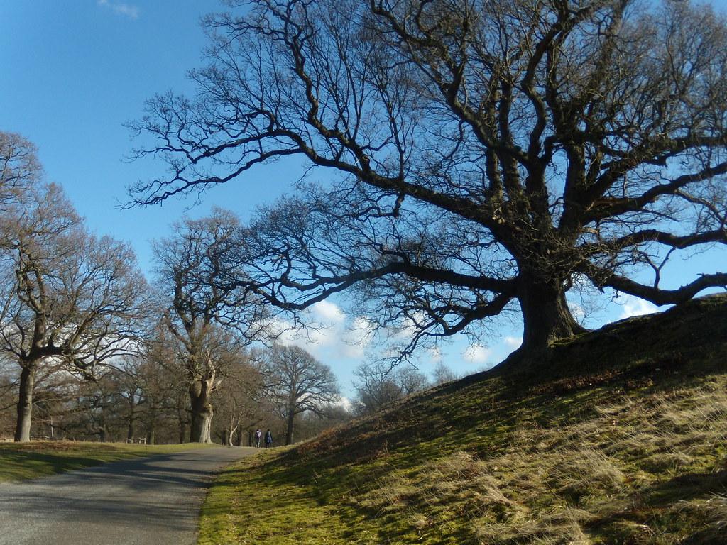 Tree, Parham Park Amberley Circular
