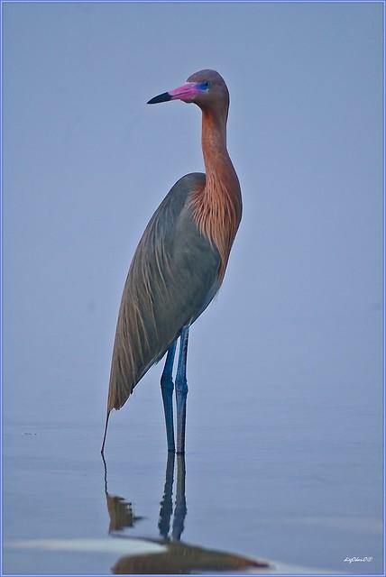 red heron bird viper head clipart viper head clipart
