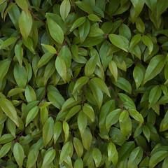 shrub(0.0), flower(0.0), produce(0.0), fruit(0.0), food(0.0), evergreen(1.0), leaf(1.0), plant(1.0), bay laurel(1.0),