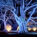 Christmas illuminations at Westonbirt Arboretum by Anguskirk