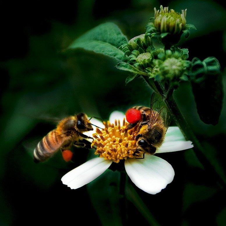 Bees on Sunday by Bùi Linh Ngân