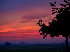 horizon, cloud, red sky at morning, tree, plain, nature, evening, silhouette, morning, savanna, sky, dusk, dawn, sunset, sunrise, afterglow,