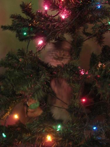 Danya's first indoor christmas tree