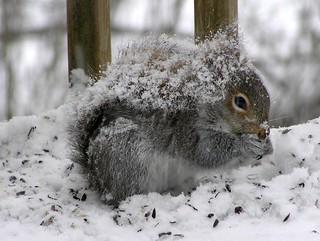 Wearing my Winter...