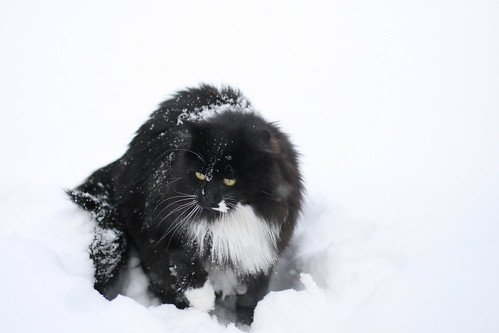 Einstein LOVES the snow!