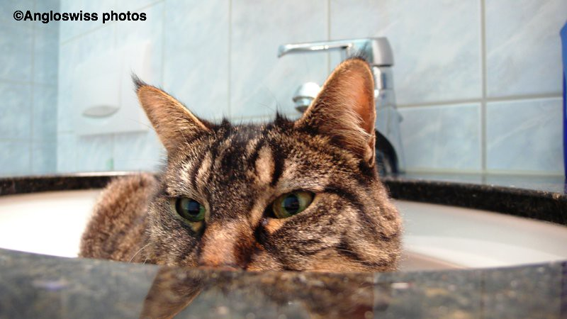 Tabby in the bathroom