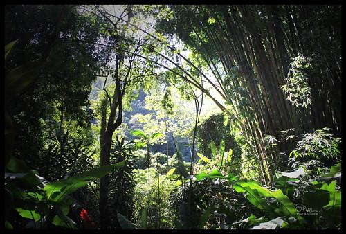 forest bosque leónverde jbll